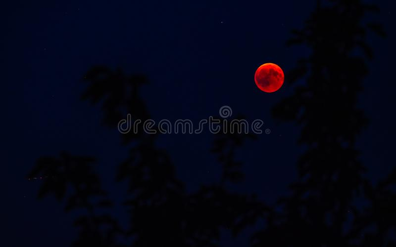 röd fullmåne som ses bak trädblod måndag från 2018 royaltyfria bilder