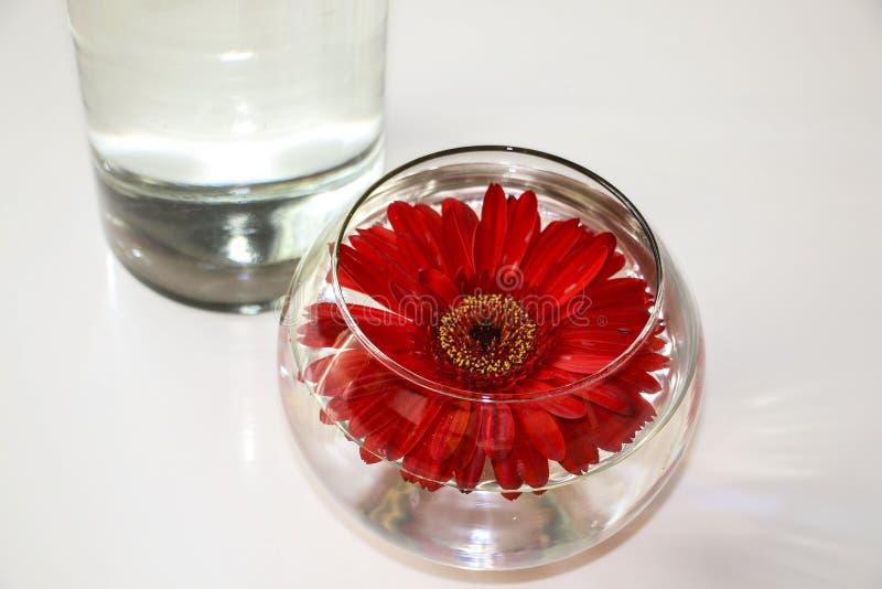Röd Gerbera i exponeringsglasvas på den vita yttersidan av tabellen royaltyfri fotografi
