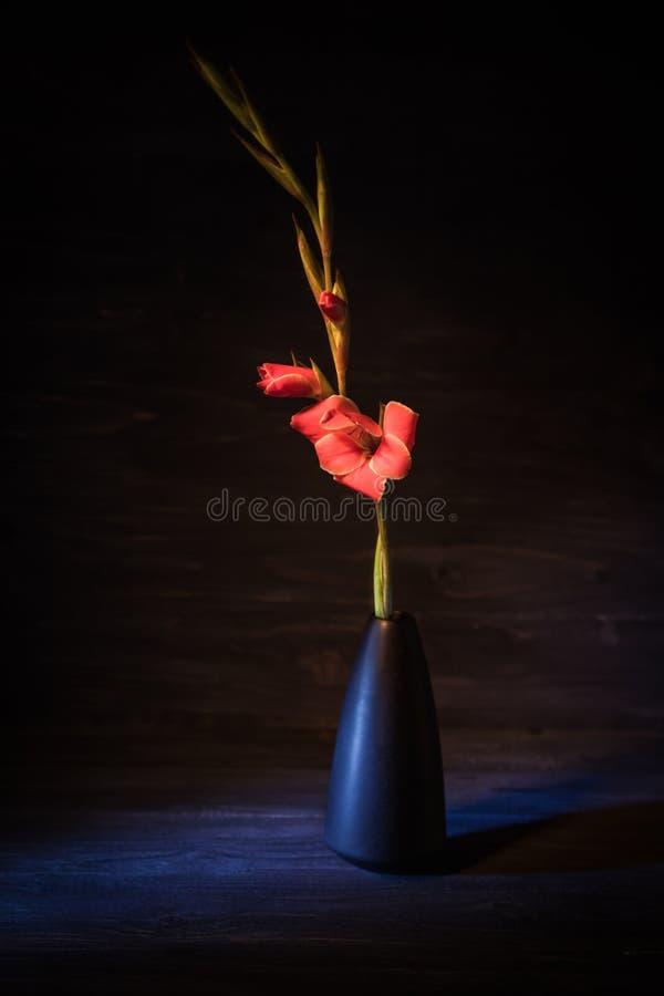 Röd gladiolus på en svart bakgrund ljus blomma eyes den härliga kameran för konst mode som fulla kanter för glamourgreentangenten arkivbilder