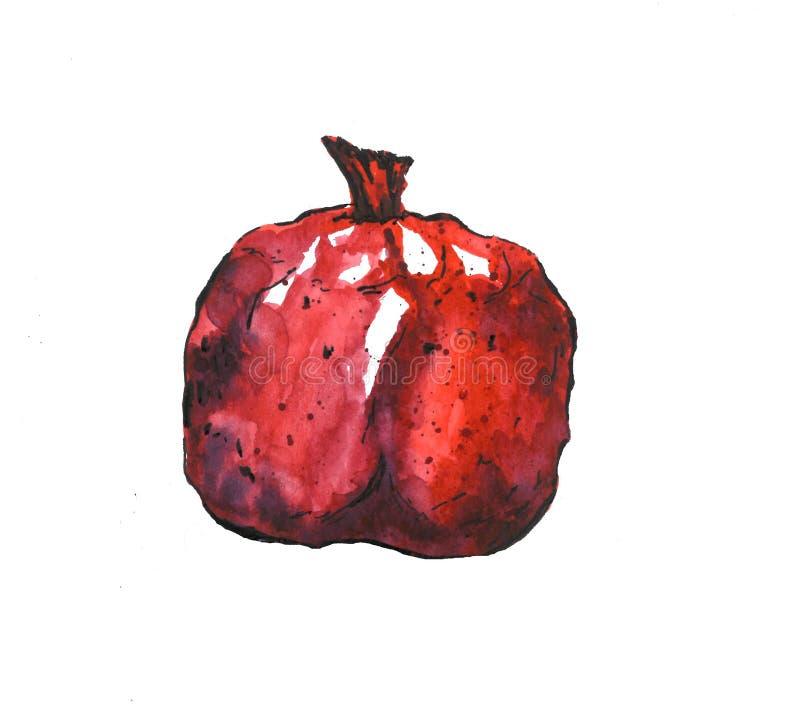 Röd granate som isoleras på vit bakgrund, skissar höst royaltyfria bilder