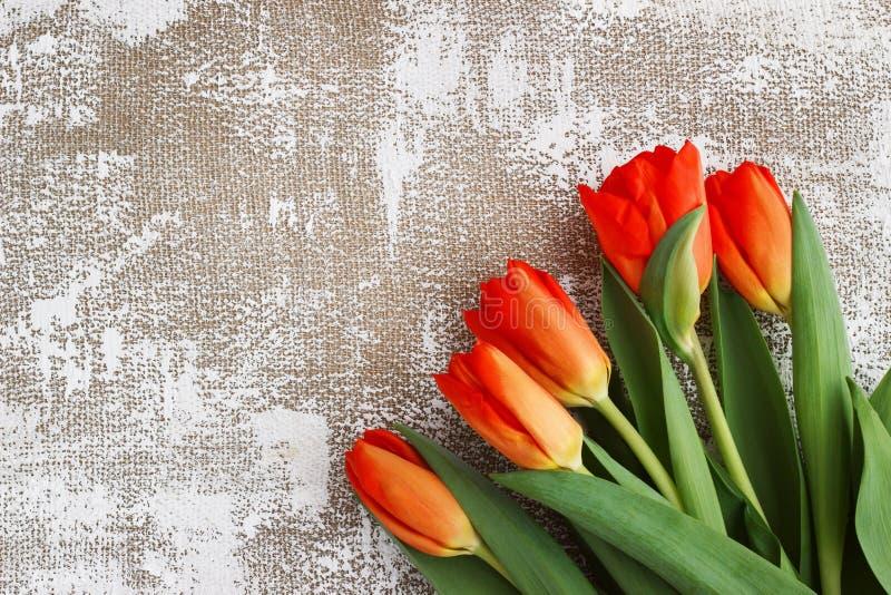 Röd-guling tulpan på en ljus bakgrund Vår - affisch med utrymme för fri text arkivfoton