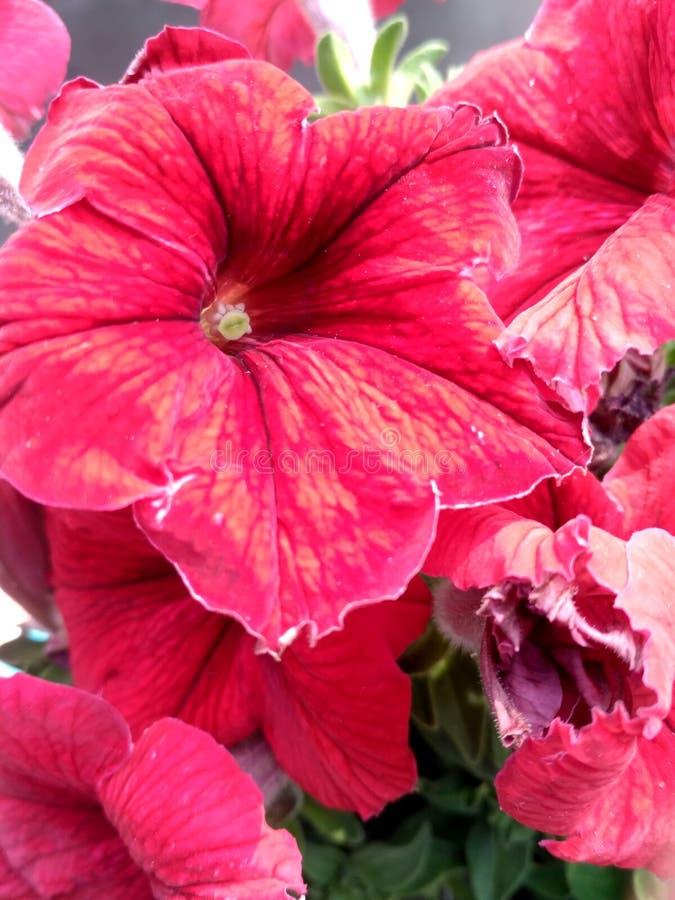 Röd härlig blommahd avbildar av den sedda naturmorgonen arkivbild