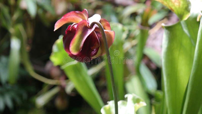 Röd härlig växt i natur arkivbild