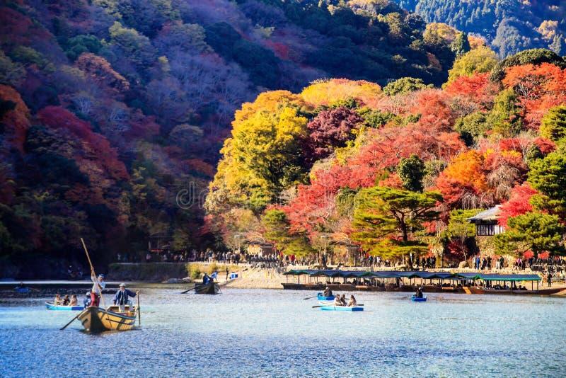 Röd höstnedgång för japansk lönn momijiträd i kyoto Japan royaltyfri fotografi