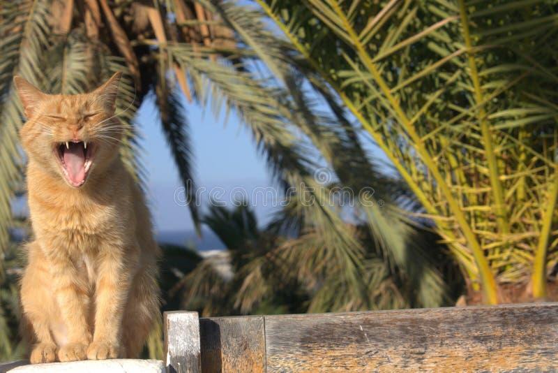 Röd-hövdad strimmig katt som lagar mat med grädde den roliga katten royaltyfria bilder