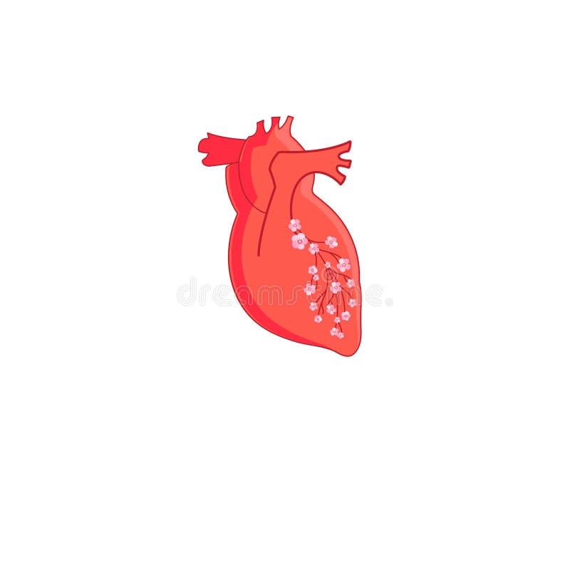 Röd hjärta för vektor vektor illustrationer