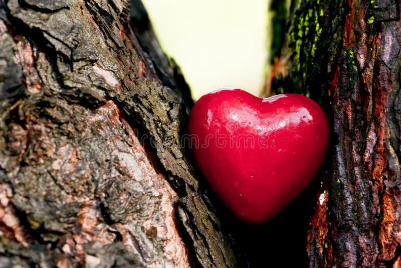 Röd Hjärta I En Trädstam. Romantisk Förälskelse Arkivbild
