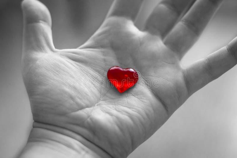 Röd hjärta i hand på svartvit bakgrund royaltyfria foton
