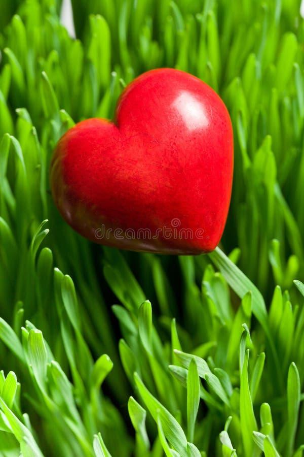 Röd hjärta på grön gräsmatta royaltyfri foto