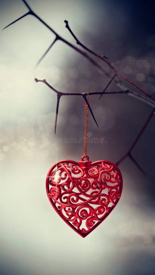 Röd hjärta på taggiga filialer fotografering för bildbyråer