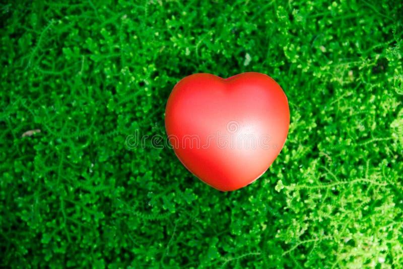 Röd hjärtaförälskelse på grönt gräs royaltyfria bilder