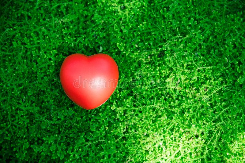 Röd hjärtaförälskelse på grönt gräs arkivfoton