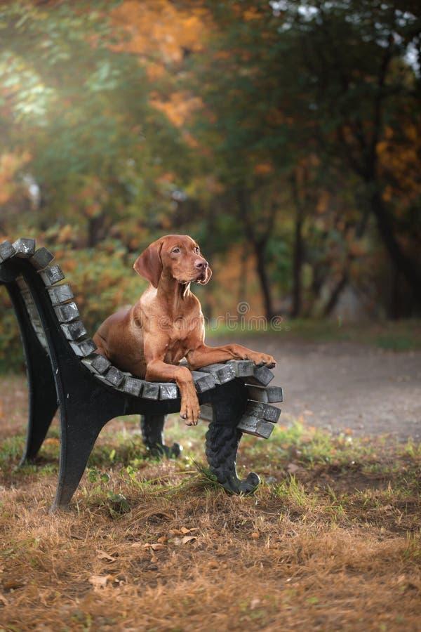 Röd hund utomhus på grönt gräs arkivfoto