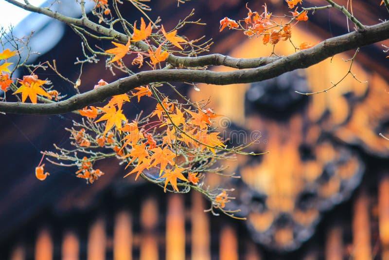 Röd inre Kotoin för blad och för tak tempel, Kyoto arkivfoto