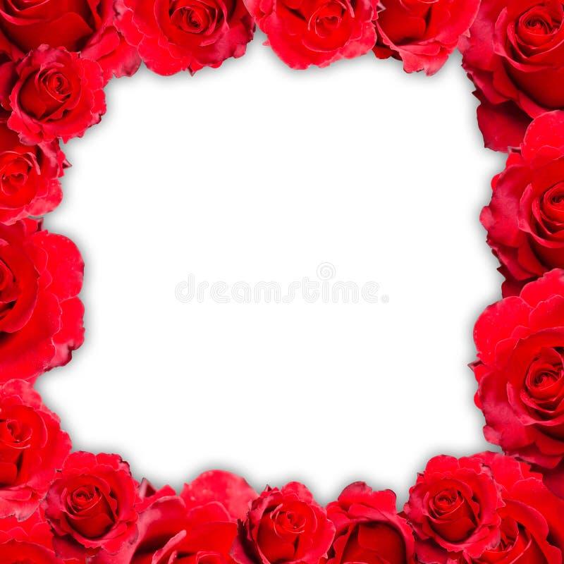Röd isolerad rosram royaltyfri fotografi