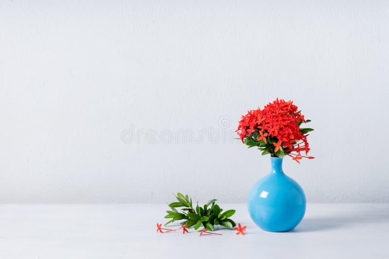 Röd ixorablomma i blå keramisk vas royaltyfria foton