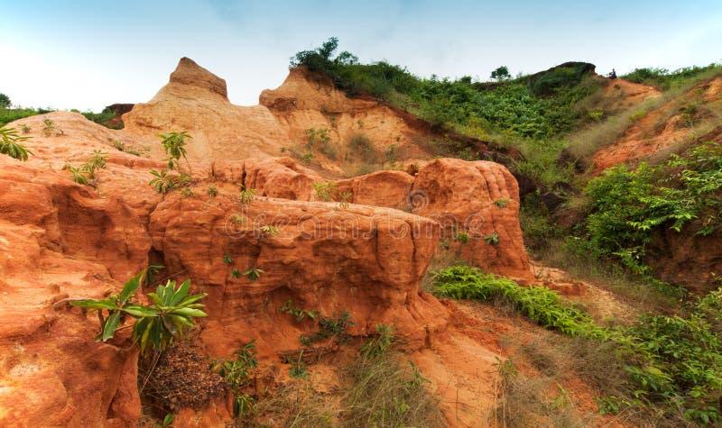 Röd jord av gongonien, västra Benga, Indien royaltyfri fotografi