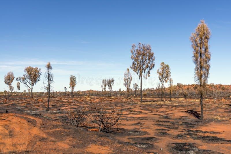 Röd jord och träd brände vid aboriginer i den australiska vildmarken på en härlig solig dag i Ayers vaggar arkivbild
