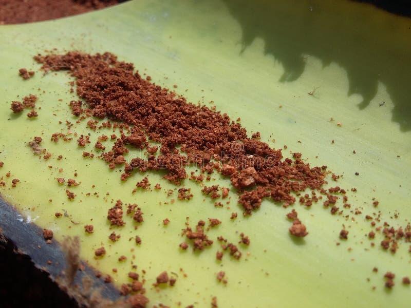 Röd jord på det gröna skället royaltyfri fotografi