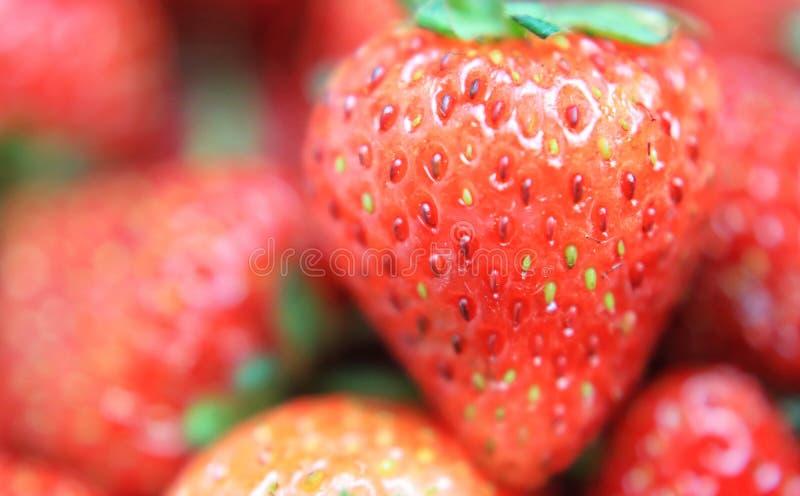 Röd jordgubbe på vit bakgrund arkivbild