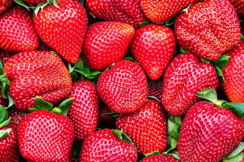 Röd jordgubbemodell i marknaden, nya jordgubbar textur, frukt royaltyfri fotografi