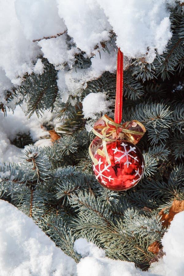 Röd jul klumpa ihop sig att hänga på prydliga trädfilialer som täckas med snö arkivbilder