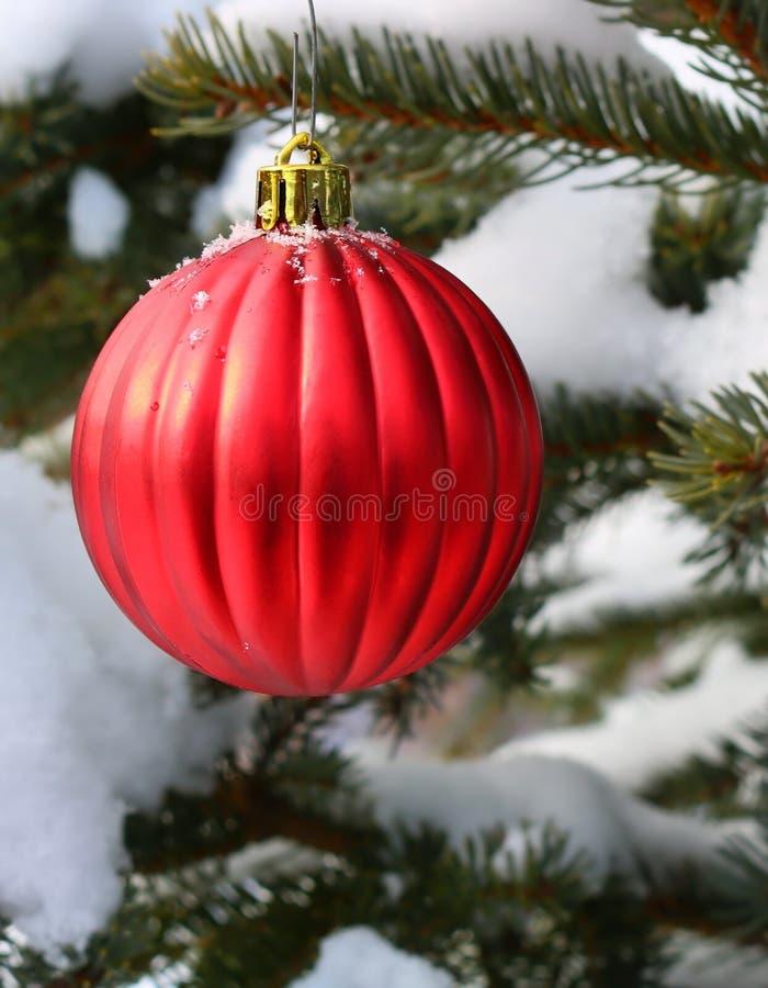 Röd julkula på snöig prydligt träd royaltyfri bild