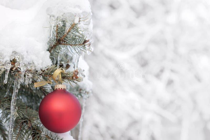 Röd julprydnad på utomhus- träd fotografering för bildbyråer