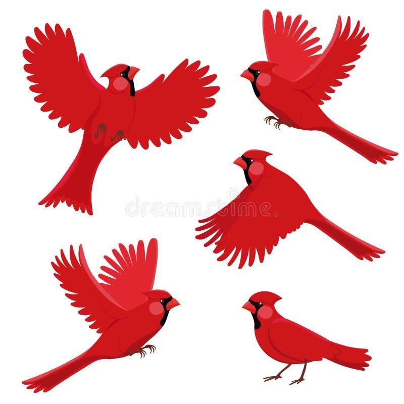 Röd kardinal för fågel i olika positioner Isolerad vektorillustration p? vit bakgrund vektor illustrationer