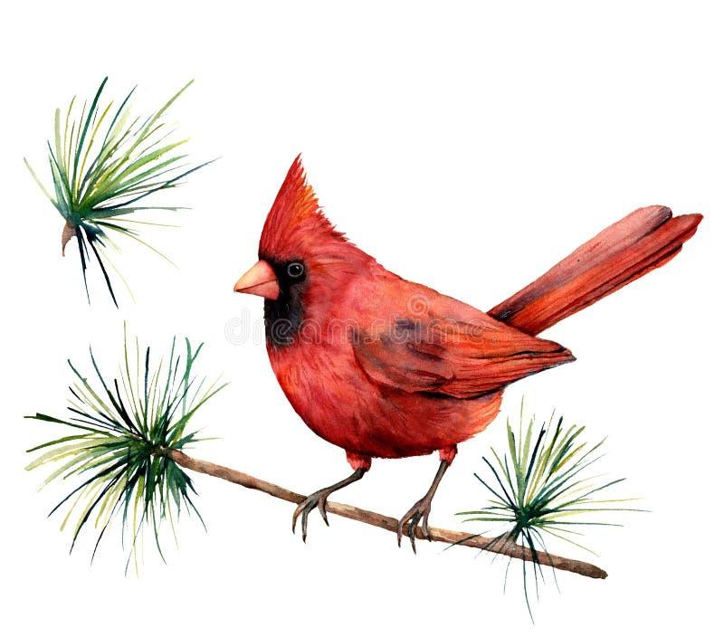 Röd kardinal för vattenfärgfågel Räcka den målade illustrationen för hälsningkortet med fågeln och filialen som isoleras på vit b stock illustrationer