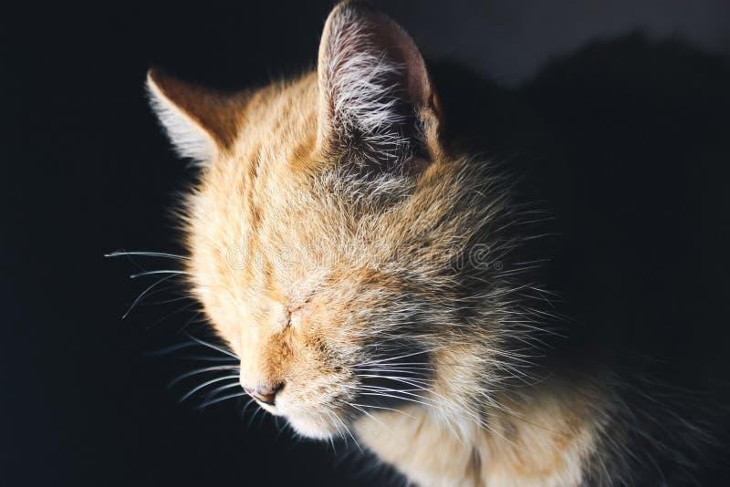 Download Röd katt arkivfoto. Bild av pott, orange, rött, gulligt - 76701874