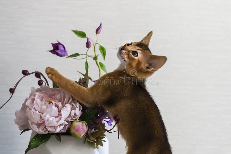 Röd katt med blomman en vas arkivbilder