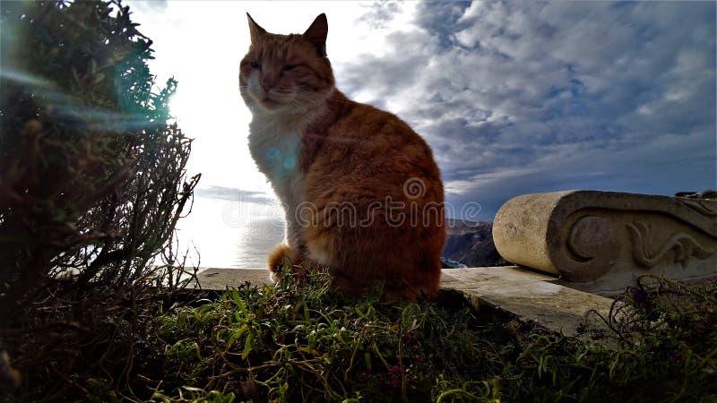 Röd katt på en bakgrund av blå himmel royaltyfri foto