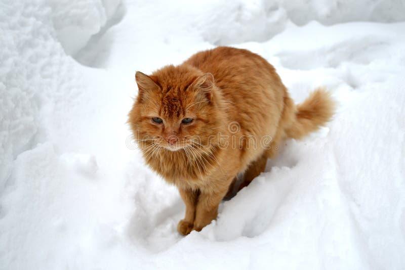 Röd katt på en vit snöbakgrund royaltyfri fotografi