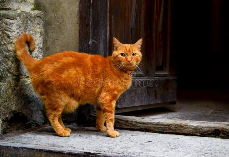 Röd katt på gatan fotografering för bildbyråer