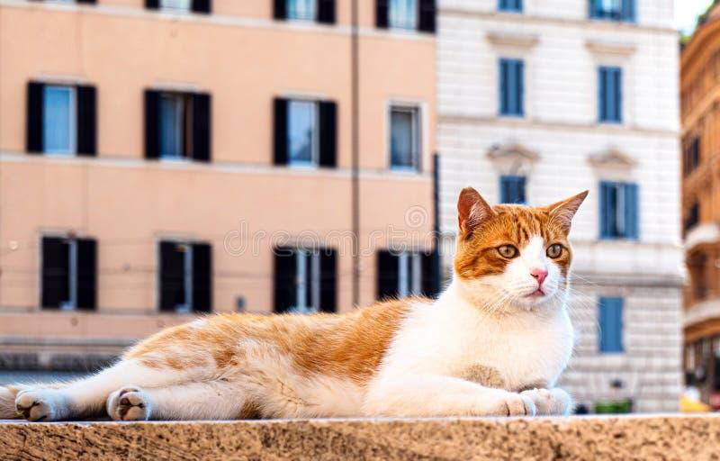 Röd katt på Largo di Torre Argentina Square i Rom, där många katter traditionellt lever royaltyfri fotografi