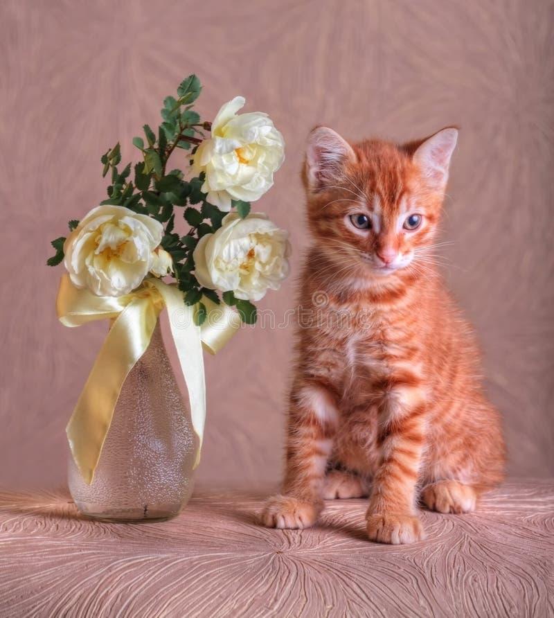 Röd kattunge med buketten av lösa rosor royaltyfri fotografi