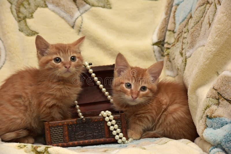 Download Röd kattunge två arkivfoto. Bild av kamratskap, furry - 76701034