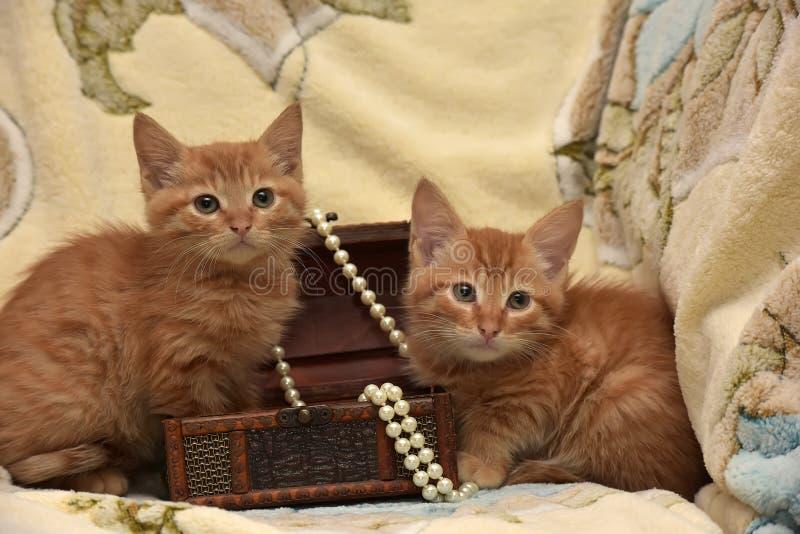 Download Röd kattunge två arkivfoto. Bild av beröm, furry, öron - 76701042