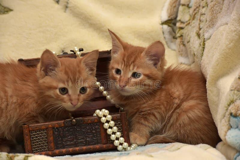 Download Röd kattunge två fotografering för bildbyråer. Bild av årsdagen - 76701087