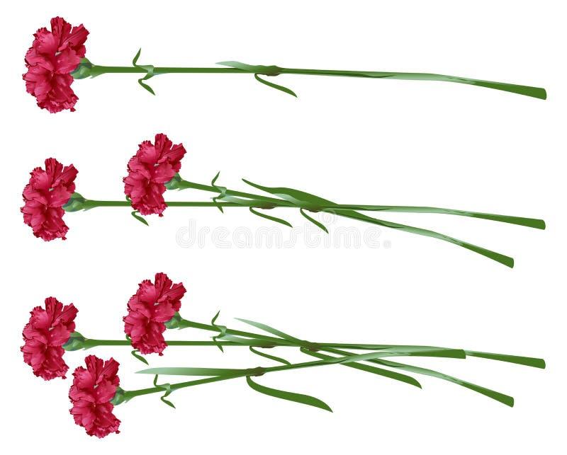 Röd kryddnejlika för bukettkort för bakgrund härlig trädgård för blommor för nejlikor Ställ in nejlikablommor vektor illustrationer