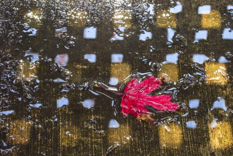 Röd lönnlöv som svävar i vatten royaltyfri foto