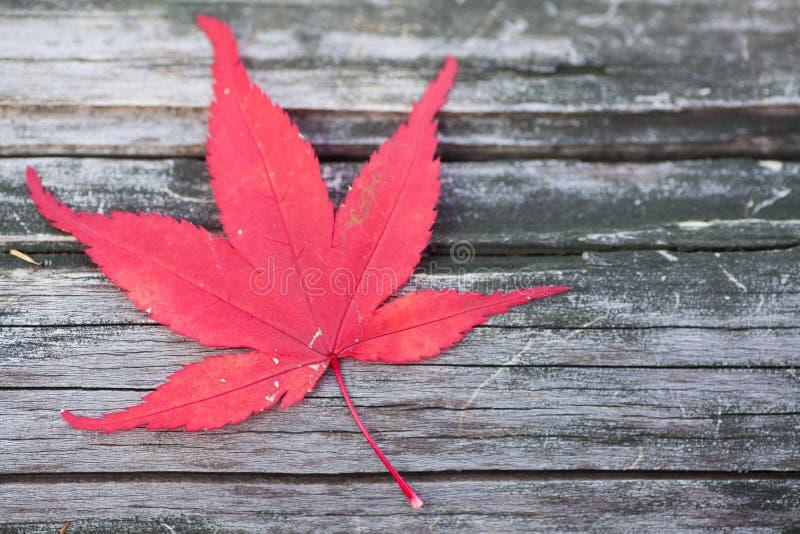 Röd lönnlövnedgång på det wood golvet royaltyfri fotografi