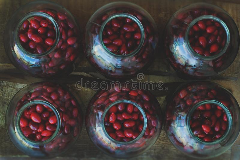 Röd lös rosa höft i krus royaltyfri bild