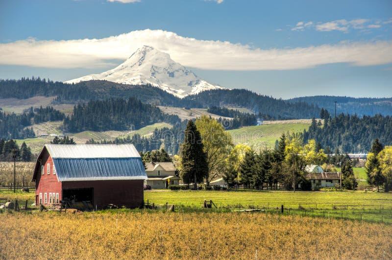 Röd ladugård, äpplefruktträdgårdar, Mt.-huv fotografering för bildbyråer