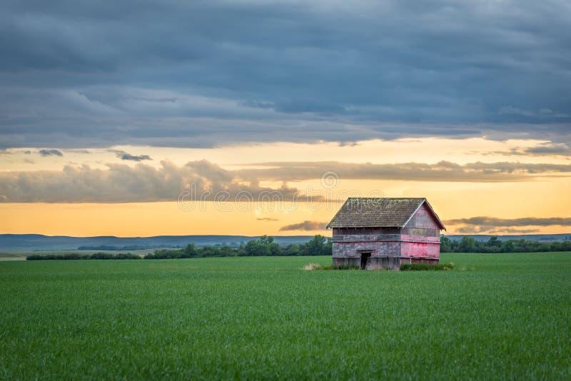 Röd ladugård för tappning i ett vetefält på solnedgången i Saskatchewan, Kanada royaltyfri fotografi