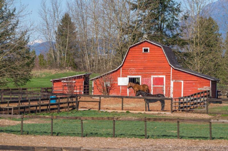 Röd ladugård och hästpaddock royaltyfria foton