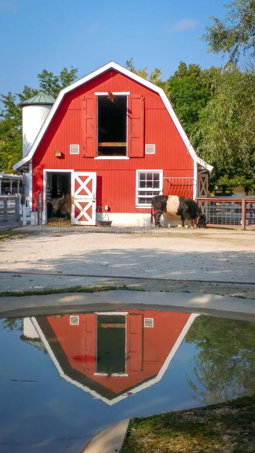 Röd ladugård reflekterad i regnpöl