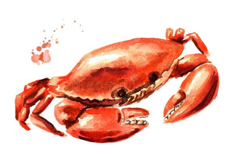 Röd lagad mat krabba, skaldjur, utdragen illustration för vattenfärghand som isoleras på vit bakgrund vektor illustrationer