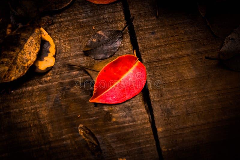 Röd leaf arkivfoton